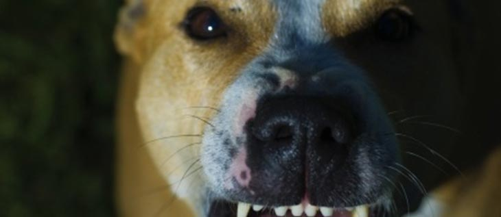 Reconstructive surgery often needed for dog bites
