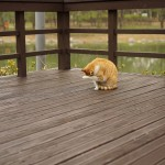 A cat in deck, deck related injuries