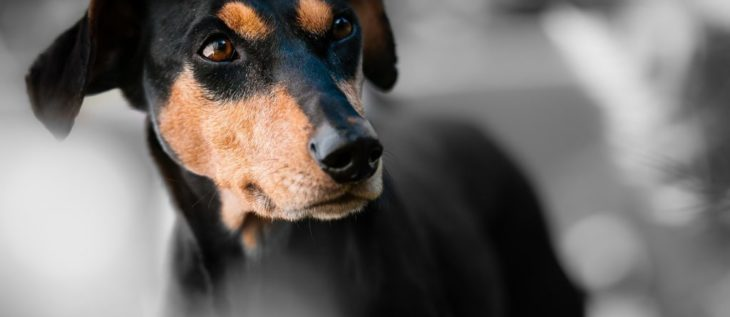 What You Should Know About Dog Bites
